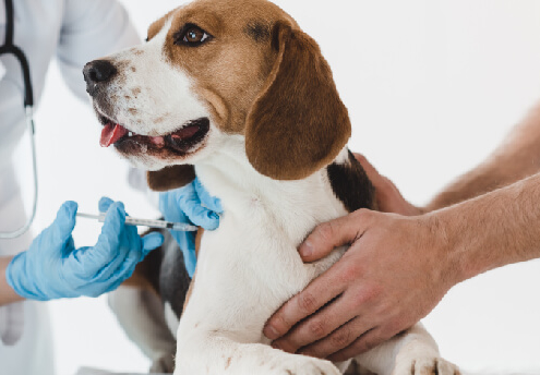 Vacinação e identificação eletrónica para cães com horários mais restritos