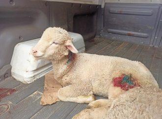Animais feridos após ataque na Branca