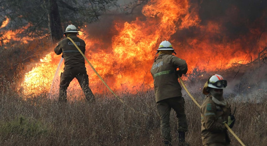 Investigadora da UA diz que financiamento pós-fogo florestal é mal aplicado em Portugal