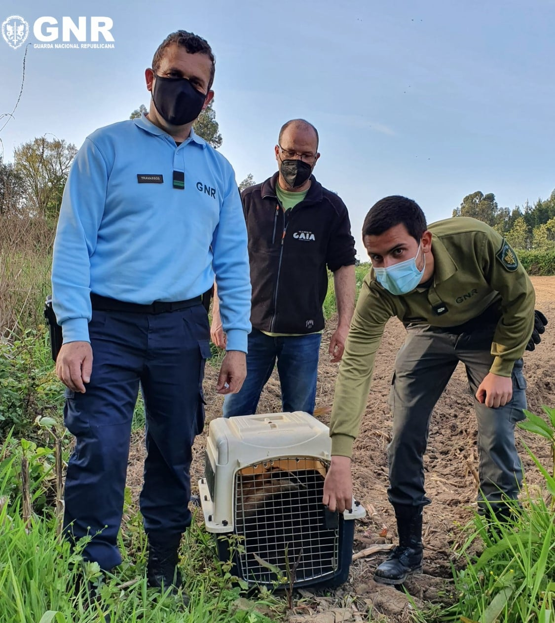 GNR devolve texugo-europeu a habitat natural