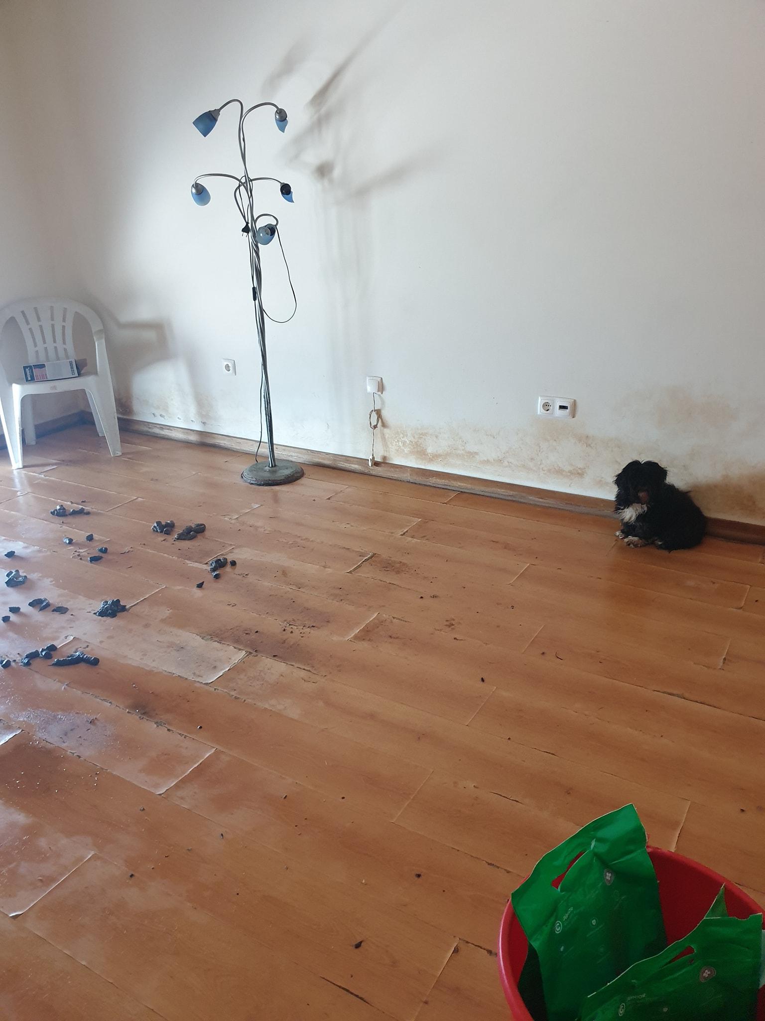 Cães encontrados em situação degradante dentro de moradia
